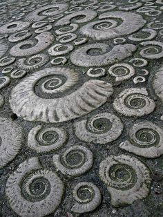 Ammonite pavement in Lyme Regis, Dorset, Great Britain, a World Heritage site. This is beautiful.