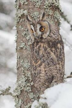 Camouflage Owl
