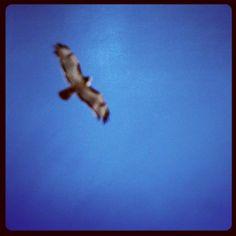 #photog #fun #hawk #spirit #pigpaint