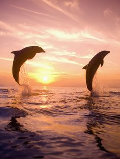My favorite animals are dolphins! They are smart and they really love friendship