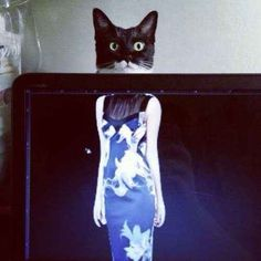 This cat who popped up at the wrong moment. | The 40 Most Awkward Cats Of 2013