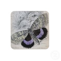 beautiful vintage butterfly illustration..on cork coaster