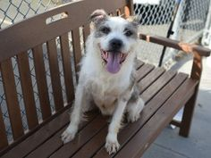 LUCY – A1042638 (2)