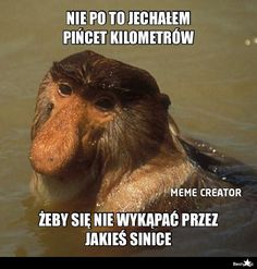BESTY.pl - Typowy Janusz Very Funny Memes, Quality Memes, Meme Lord, More Than Words, Cool, Funny Animals, Haha, Tables, Languages