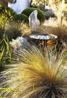 In Garden Love, photographer Simon Griffiths explores landscape designer Fiona Brockhoff's unique oasis in coastal Victoria. Coastal Gardens, Small Gardens, Landscape Design, Garden Design, Bush Garden, Australian Native Garden, Magic Garden, Meteor Garden 2018, Olive Garden
