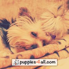 Top 50 Breeds ebook Giveaway - Puppies 4 All - 2019 Loyal Friends, Best Friends, Puppies, Amazing, Dogs, Cute, Movie Posters, Movies, Beat Friends