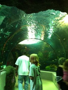 Live the Life when You Visit Virginia Beach- Virginia Beach Aquarium