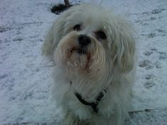 Poli jugando con la nieve