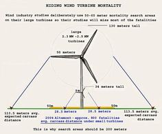 Wind farms could account for 39 million birds and bats a year.