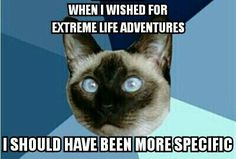 Ha, ha this is so funny. I had 'A life less ordinary' on my vision board before I got this illness!! lol