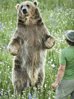 Most of us consider it cool to own an unusual animal for a pet, but a grizzly..? American naturalist would see nothing odd about that. Almost 10 years ago he rescued a 5-month-old bear from an overpopulated sanctuary, and the two have never parted ever since.