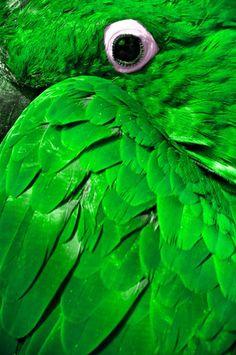 Green Feathers http://calgary.isgreen.ca/