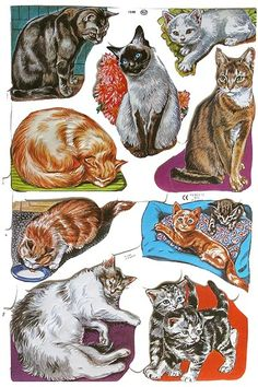 Kitty Cats Throughout the Day Scraps ~ England Childhood Toys, Childhood Memories, Good Old Times, Vintage Paper Dolls, Cartoon Pics, Vintage Love, Vintage Style, Collage Sheet, Vintage Advertisements