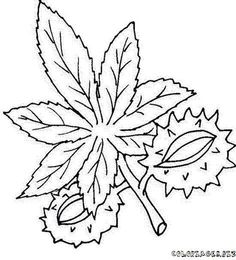 coloring page Leaves on Kids-n-Fun. Coloring pages of Leaves on Kids-n-Fun. More than coloring pages. At Kids-n-Fun you will always find the nicest coloring pages first! Adult Coloring Pages, Coloring Sheets, Animal Skeletons, Leaf Drawing, Picasa Web Albums, Leaf Coloring, Bead Jewellery, Digital Stamps, Print Pictures
