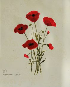 botanical poppies  artist: Catherine Brink