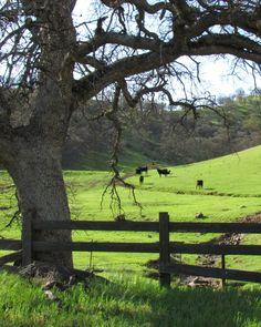 "wilburhotsprings: "" photo by Meg Solaegui, Colusa County, CA """