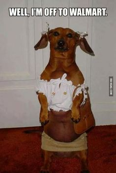 funny dogs, dachshund, animal humor, funny dog pictures, dog funnies
