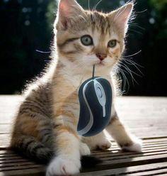 J'ai attrapé la souris !!!