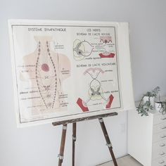 VINTAGE CLEARANCE SALE! 30% OFF original price. WAS $215 | NOW $150.50  fabulous vintage french biology poster from the 1960s. double sided with one