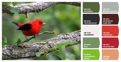 Brilliant red with green and gray. Paint colors from Chip It! by Sherwin-Williams