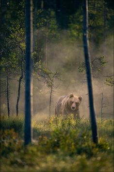 Braunbär by Georg Scharf / 500px Great Shots, Polar Bear, Panther, Cool Photos, Animals, Bears, Animales, Animaux, Panthers