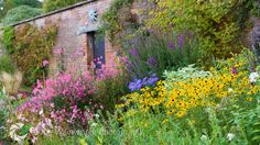 Late Summer Border - brown eyed susans, diascia, guara, white phlox, lythrym, aster, columnar berberis,