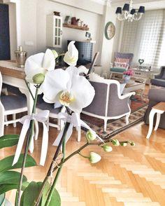 Curious one by tgbyucel #homedesign #contratahotel (o) http://ift.tt/1Q7xvYS yeni bir umut günaydın hayırlı haftalar orkidelerim tek tek açıyolar maşallah diyin he mavi orkide istiyorum da bakalım ne zaman gelicek ______________________________________ #orkide #mutluluksebebi #flowers #home #mutluyumçünkü #goodmorning #happiness  #homeinterior #homedecor #orchid #photograph #photooftheday #instafollow #tagsforlikes #shabbychic #pastelhome #pastelcolors #today #monday #goodweek #vscocam…
