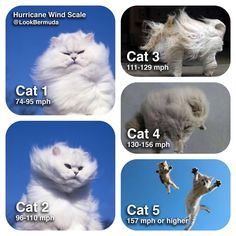 hurricane predictions