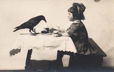 crow pet
