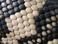 Close up of snake skin - black and white reptile texture