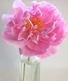 pink!   Flickr - Photo Sharing!