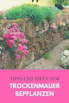 Heute geben wir Ihnen nützliche Tipps zur Mauerbepflanzung und einige Vorschläge für attraktiv blühende Felsen- und Steppenpflanzen mit geringem Pflegeaufwand.