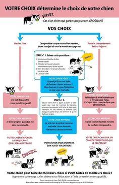 Votre chien est-il possessif ou garde-t-il ses jouets? | Éducation canine des Quatre pattes