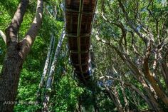 The Boomslang-Photo by Adam Harrower (11)