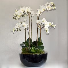 Buy Or Rent Stunning Luxury Artificial Orchids. All Handcrafted Using The Finest Fresh Touch Artificial Flowers. Black Planters, Artificial Silk Flowers, Phalaenopsis Orchid, White Orchids, Vase, Plants, Beauty, Plant, Vases