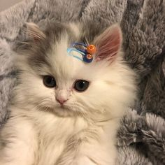 Cute Baby Cats, Cute Little Animals, Cute Cats And Kittens, Cute Funny Animals, I Love Cats, Cool Cats, Kittens Cutest, Funny Kitties, Pretty Cats