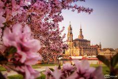 Frühlingsmorgen im Königsufer.