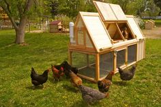 Some of the Cheap Portable chicken coop has the facility of windows which help considerable the chick to get the natural light and the wind. The circulation of air within the coop helps the chicks to grow in proper manner. The sliding door to access the coop is another interesting part of such movable coop. http://www.cheapportablechickencoop.com/