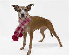Animal Services has hundreds of adoptable pets at any given time. Pitbull Adoption, Ready To Go, Orange County, Pitbulls, Pets, Animals, Animales, Pit Bulls, Animaux