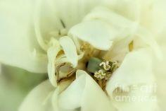 The Reveal - Belinda Greb #flowers #flowerphotography #floralphotography #naturephotography #BelindaGreb