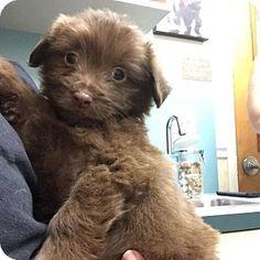 Ft. Lauderdale, FL - Terrier (Unknown Type, Medium) Mix. Meet Baxter, a puppy for adoption. http://www.adoptapet.com/pet/17023995-ft-lauderdale-florida-terrier-unknown-type-medium-mix