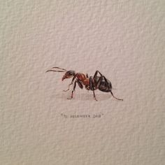 Day 365 : THE END. Painting of an ant for #365paintingsforants. 28 x 7 mm. It has been an overwhelming year, but looking back, it's no doubt that the rewards greatly outweigh the challenges. I wish I could thank everyone by name but here's my best shot: to every liker, sharer, well-wisher, word-spreader, critic, buyer, friend, family member and stranger who has supported me and kept me going in any way. You have enabled me to live the dream and for that I am forever grateful. Over and out…