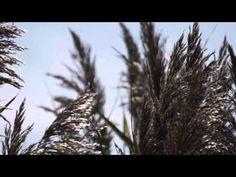 HERMANN HESSE - Je differenzierter - YouTube