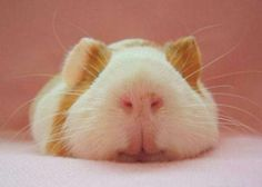 sleepy animals 10 Daily Awww: Sleepy animals (25 photos)