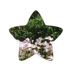 Nature Photo CherryHILL New Jersey America NVN663 Star Stickers