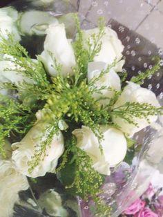 Rosas Brancas... Paz!