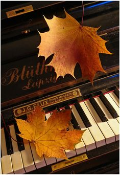 ".The autumn leaves drift past my window...  Love to hear the music "" Autumn Leaves"" played on the piano."