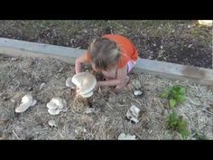 How to Grow Massive Oyster Mushrooms in Your Straw Garden, Part 1 - YouTube