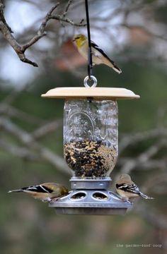DIY repurposed vintage chicken feeder and mason jar bird feeder Best Bird Feeders, Diy Bird Feeder, Bird House Feeder, Mason Jars, Mason Jar Crafts, Garden Crafts, Diy Crafts, Diy Bird Bath, Yard Art