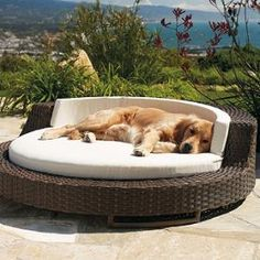Outdoor Wicker Pet Bed. Maybe if I get this for my dog, he'll actually go outside.